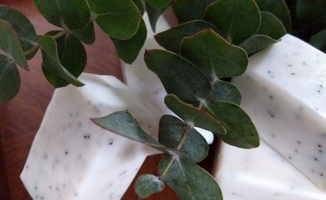 Eucalyptus Poppy